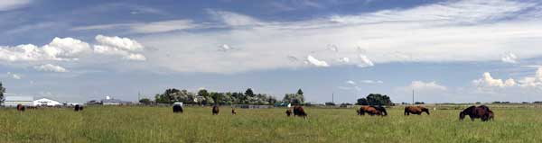 Prairie Breeze broodmares