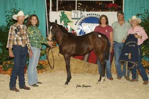 2007 High Selling Filly