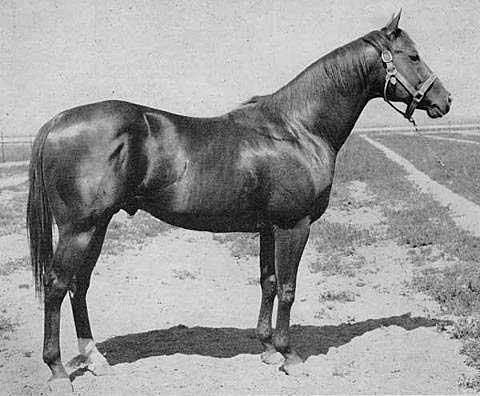 Prairie Breeze Quarter Horses