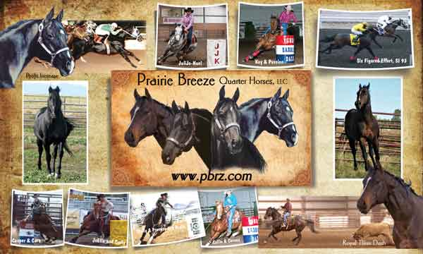 Prairie Breeze Quarter Horses