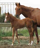 Profit Increase foal