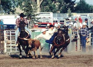 Prairie Breeze Qh Ranch Sales And News